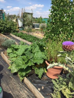 Lorrel and Peter's Allotment
