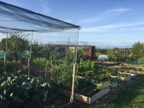 22B and C Allotment Winner